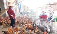 Vietnam to take measures against H7N9 avian influenza