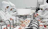 Exportaciones de camarón aumentan 38% comparado con el mismo período
