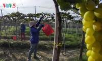 Vietnam fomenta la capacidad resistente del sector agrícola al cambio climático