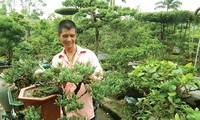 Das Bonsai-Dorf Vi Khe