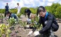 Weltbank hilft Vietnam bei Anpassung an den Klimawandel und Grünem Wachstum