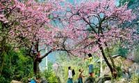 Neuer Frühling bei allen Vietnamesen