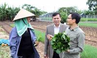 Vizepremierminister Vu Duc Dam überprüft Anbaumodelle für saubere Gemüse in Hung Yen