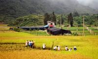 Demokratie bei Neugestaltung ländlicher Räume in Lao Cai
