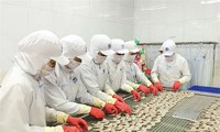 Vietnam will Exportvolumen von Garnelen erhöhen