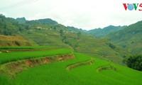 Das Fest für den neuen Reis der Gie Trieng-Volksgruppe