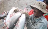 ปลาสวายของเวียดนามถูกระบุชื่อในหนังสือปกเขียวของเดนมาร์คและสวิเดน