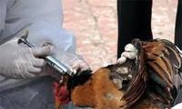 สรุป 4 ปีการปฏิบัติความคิดริเริ่มเกี่ยวกับการป้องกันโรคไข้หวัดนก
