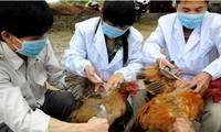ผลักดันงานด้านการป้องกันโรคไข้หวัดนกสายพันธุ์ใหม่ H7N9