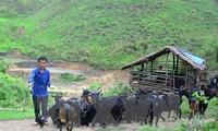 เวียดนามถือการแก้ปัญหาความยากจนคือเป้าหมายที่สูงสุดของโลก