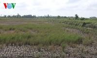 คำสั่งของนายกรัฐมนตรีเกี่ยวกับการรับมือกับปัญหาน้ำทะเลซึมในเขตที่ราบลุ่มแม่น้ำโขง