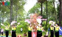 เอกลักษณ์วัฒนธรรมเซินลาในตรุษเต๊ตตามประเพณี 2017 ณ กรุงฮานอย