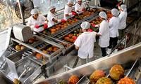 Vietnam seeks way to boost vegetable, fruit export