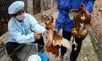 Hanoi gears up efforts to prevent epidemics during Tet