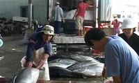 Phu Yen to pilot new tuna production model