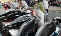 Vietnam hopes cooperation with Japan on ocean tuna exports will succeed