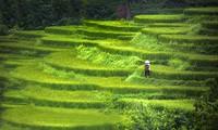 Beautiful Vietnam through American tourist's lens
