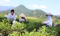 Dai Tu tea festival in Thai Nguyen