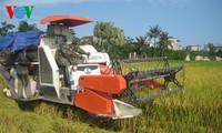 越南十四届国会二次会议:加快农业结构重组过程