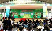 加强向世界推介越南安全农产品