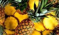 前江省菠萝价格猛涨