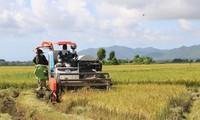 越南新稻价格微涨 大米出口出现积极信号