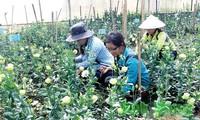 첨단 농업 개발 - 문제와 해결책