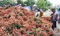 전통 시장에서의 농산물 소비 촉진