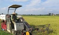 타이빈, 농업 경제 발전