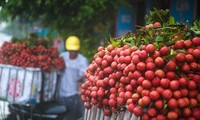 Vietnam Airlines: les litchis au menu
