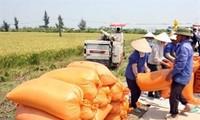 Vietnam, Ireland cooperate in agriculture