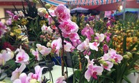 Hang Luoc Flower Market in Hanoi's Old Quarter