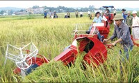 Japan to introduce investment opportunities in Vietnam's agriculture