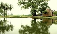 Характерная структура традиционной деревни Вьетнама