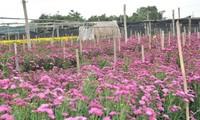 Цветочная деревня Тэйтыу в предновогодние дни