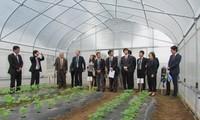 Провинция Ханам развивает высокотехнологичное сельское хозяйство