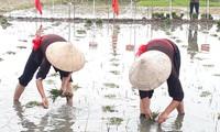Своеобразный праздник выхода на рисовые поля в провинции Куангнинь