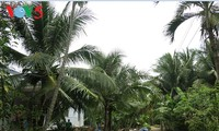 Кокосовые пальмы в провинции Бенче