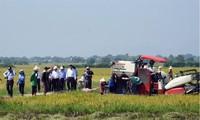 В Ниньтхуане применяют модель сельскохозяйственного производства на больших полях