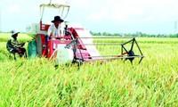 Провинция Тхайбинь развивает сельское хозяйство