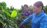Quand caféiculture rime avec développement durable