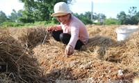 Dong Thap, où champignon rime avec million