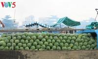 Mieux exporter les fruits vietnamiens