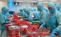 Accroître  les exportations de crevettes