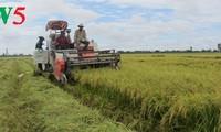 Créer des champs de grande superficie dans le delta du Mékong
