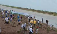 Plantation de mangroves pour s'adapter au changement climatique