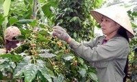 Việt Nam và Angola tăng cường hợp tác nông nghiệp