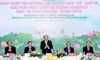 Cеминар по развитию рынка овощей и фруктов вьетнамского производства