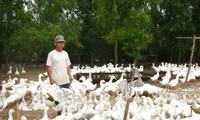 Le delta du Mékong se tourne vers l'élevage