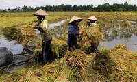 Provinsi Hau Giang mengakui kecamatan ke-20 yang mencapai standar pedesaan baru